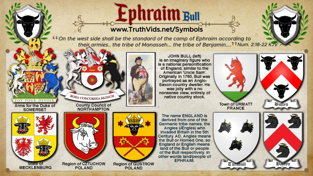 Heraldry of Ephraim a tribe of Israel the Bull Symbol