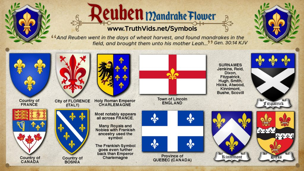 Heraldry of Reuben a tribe of Israel the Mandrake Symbol